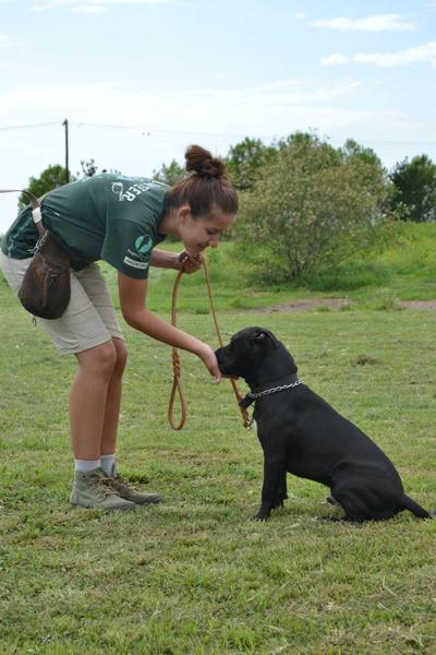南米アルゼンチンで犬のケアにあたる獣医療&アニマルケアインターン