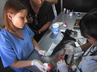 アルゼンチンで海外インターンシップ 獣医療&アニマルケア