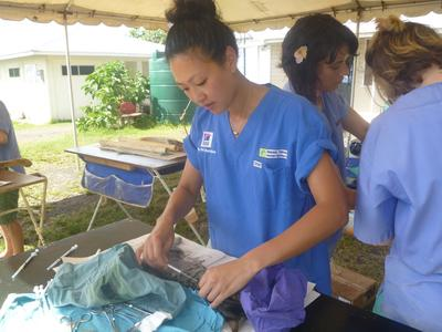 サモアで獣医療&アニマルケア ネコの殺菌・消毒作業にあたる日本人インターン