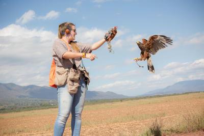 メキシコで鷹の保護活動に貢献するボランティア