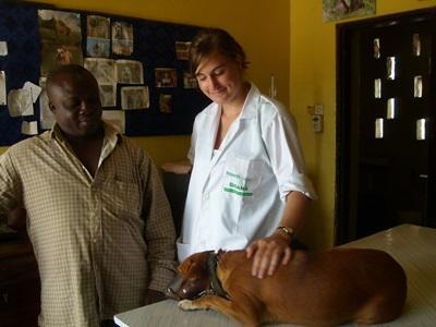 ガーナで犬の診察にあたる獣医師とインターン