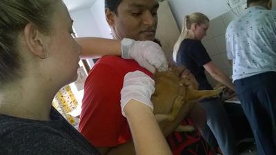 スリランカでペットのケアにあたる獣医療インターン