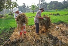 農業プロジェクトで干し草を積むプロジェクトアブロードボランティア